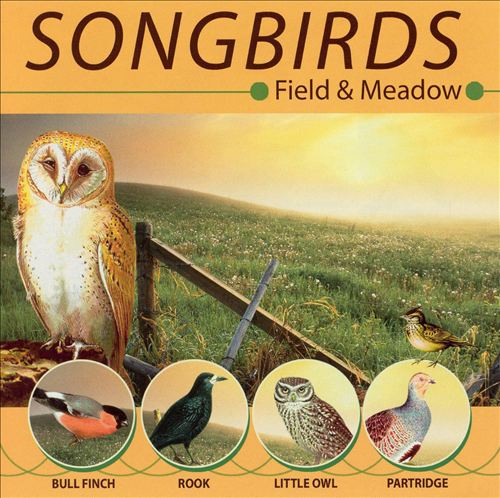 Songbirds: Field and Meadow