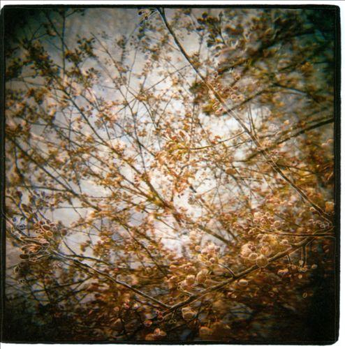 Thistled Spring