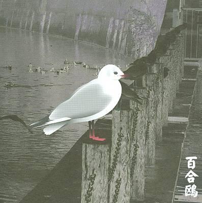 13 Japanese Birds, Vol. 3