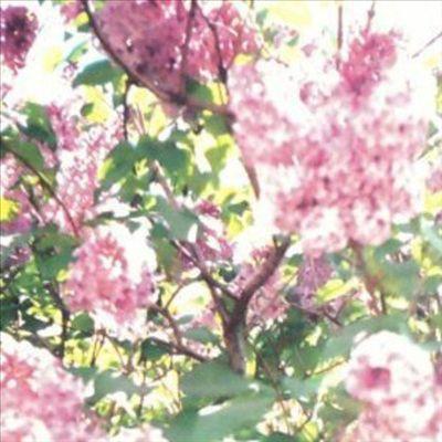 Paisley Orchard