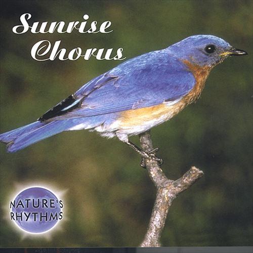 Nature's Rhythms: Sunrise Chorus